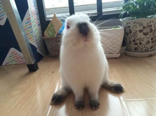 兔子体温降低还昏昏欲睡,是要冬眠吗?