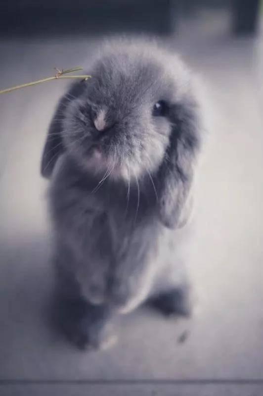 萌小兔子:一言不合就摔饭碗,就是那么有个性,从小到大的照片