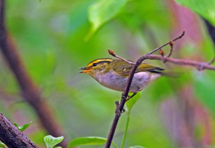鸟类的寿命和生存曲线