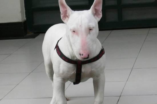 什么东西狗狗不能吃,狗狗不能吃的东西清单