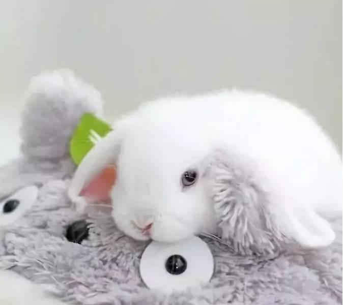 兔兔啃咬食入异物怎么办?