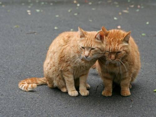 流浪猫带回家需要注意什么