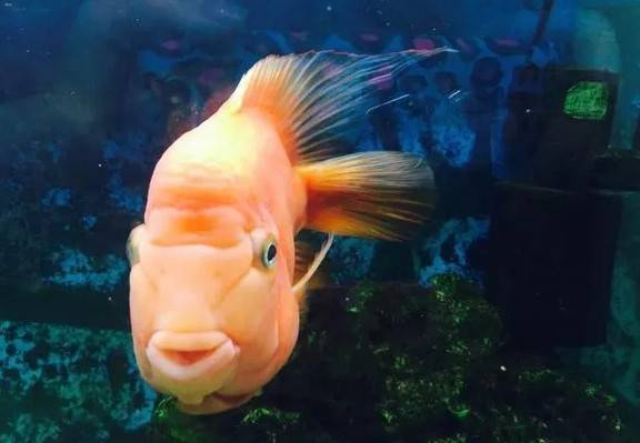 鹦鹉鱼3.jpg