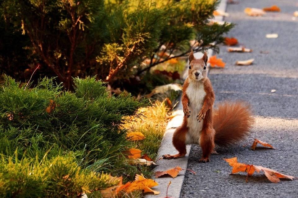 在树林里的松鼠