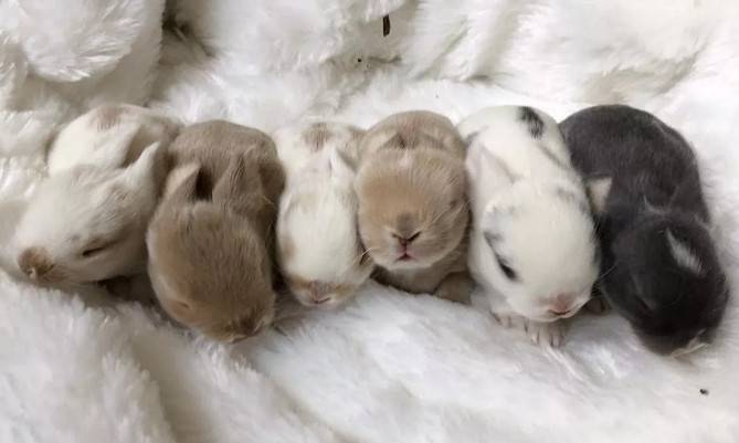 初生兔吃什么粮食好?