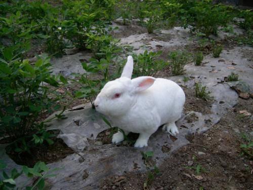 干草和兔粮食物放了一周都没吃完,兔子还能继续吃吗?