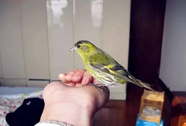 冬天训鸟专家训鸟的方法