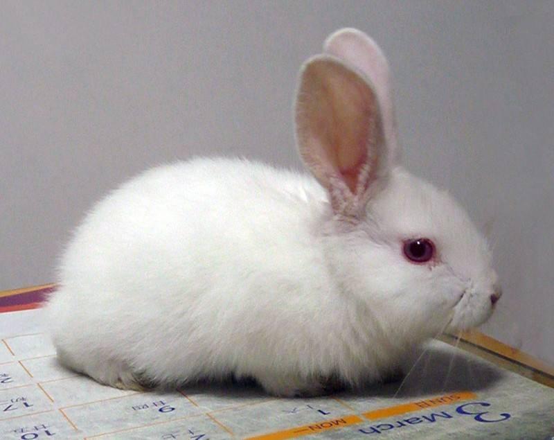 为什么兔子每天洗自己好几遍?