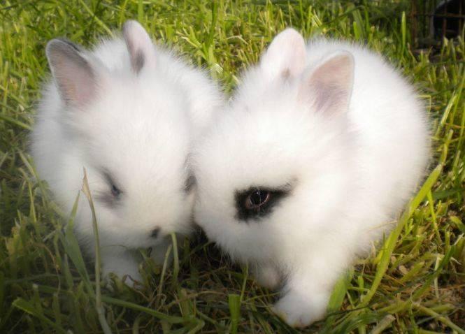 兔子不爱喝水,加点果汁行不行?