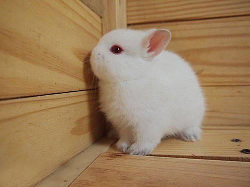 兔子为什么会扔东西,兔子为什么会咬住东西往别处扔