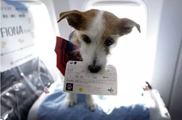 """飞机上也能撸狗!各国的""""宠物机票""""有什么不同?"""