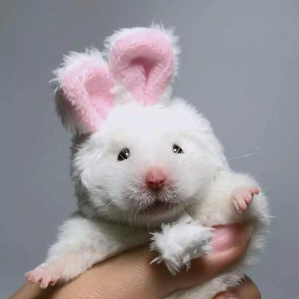 主人主人,你是不是更喜欢兔叽啊