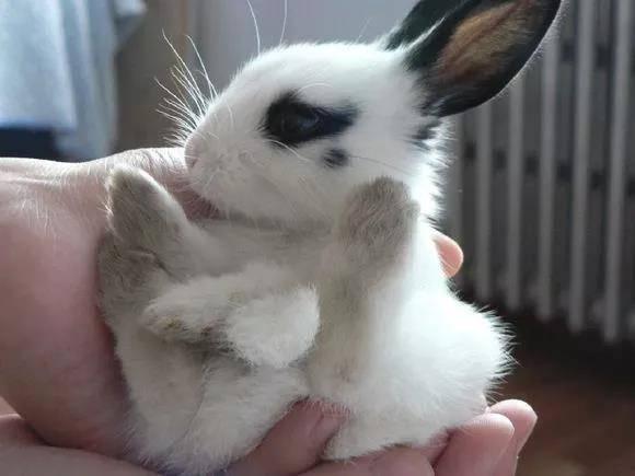 千万不要这样抱小兔子