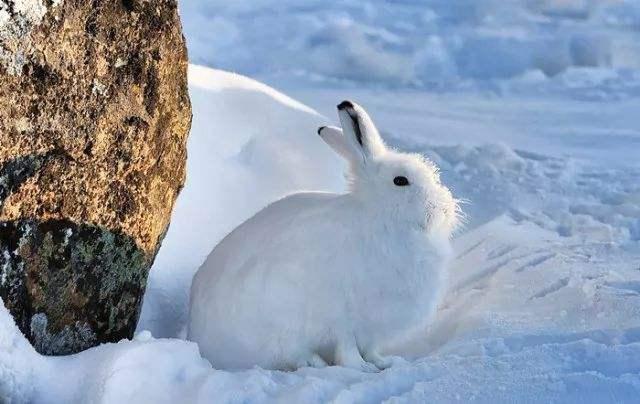 几种兔粮混着吃真的好吗
