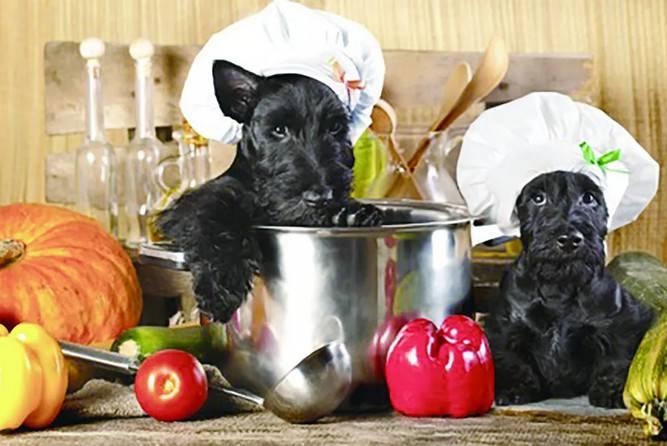 狗狗能吃生的食物吗,你真的了解生食喂养吗?