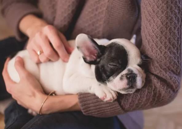 狗狗睡觉打呼噜的几种原因,你知道吗?