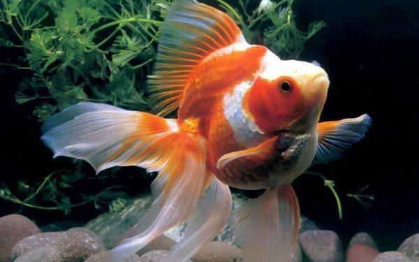 鱼身上有白点是怎么回事