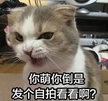 萌猫表情包