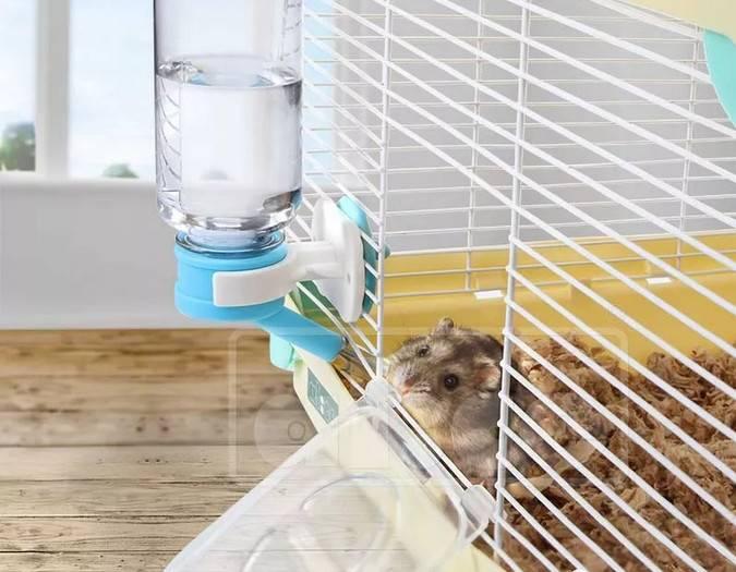 你知道仓鼠怎么喝水的吗?