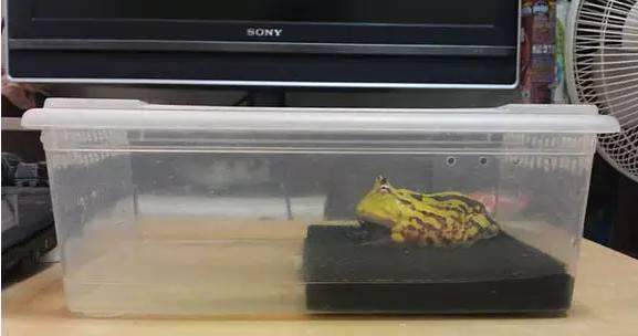 角蛙环境攻略大全,你会了吗?