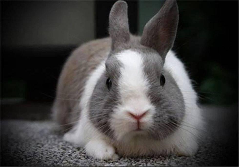 兔子得了中耳炎怎么办