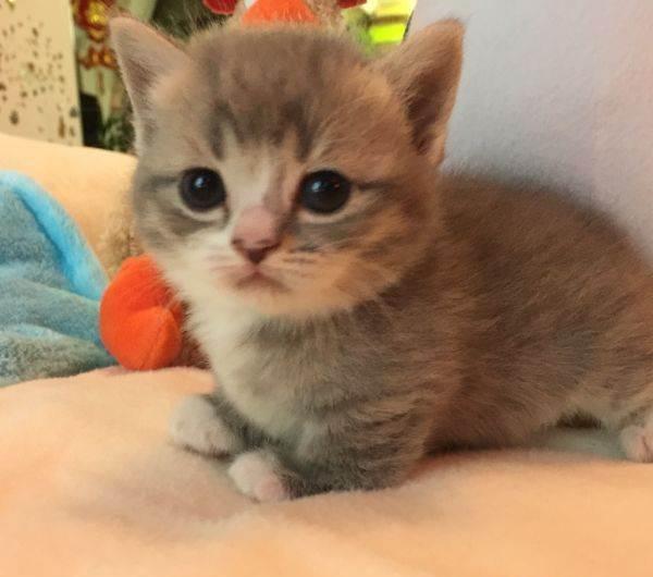 猫心丝虫介绍