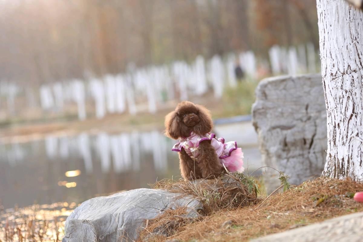 怎么训练狗狗大小便,如何训练狗狗不咬人快来看看如何训练狗狗