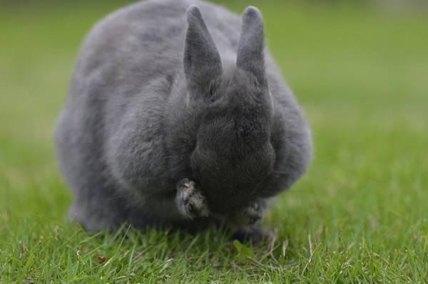兔子绝育有哪些好处?