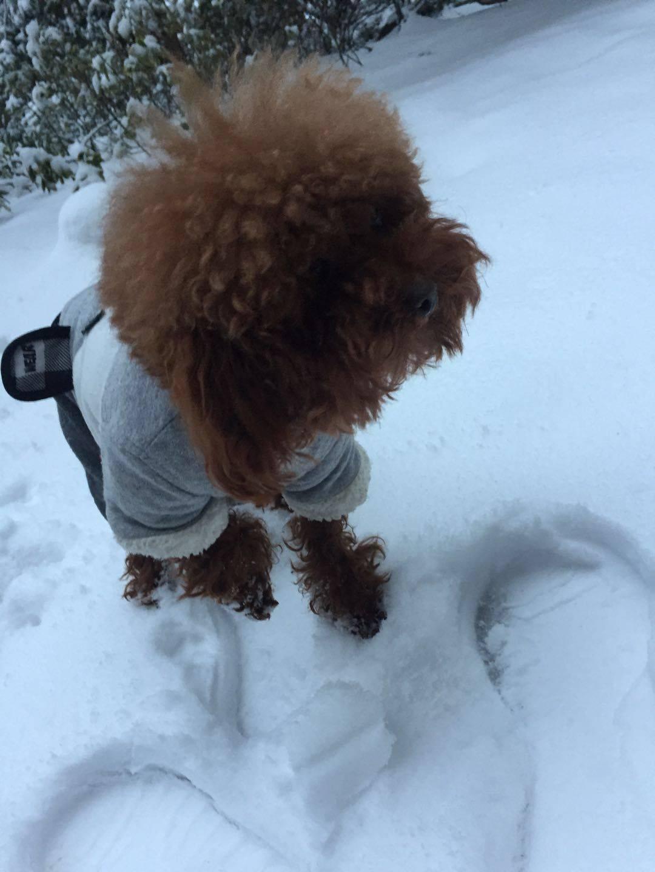 下雪了,开心~