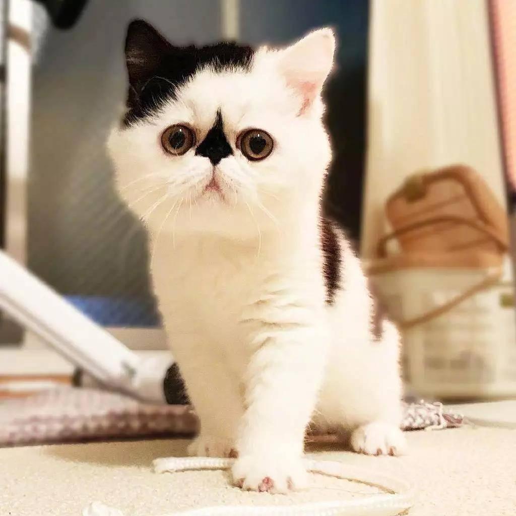 一只眉头紧锁的小可爱猫猫