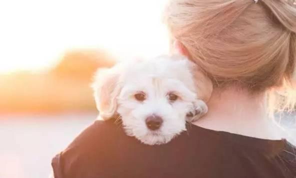 超过80%的狗狗居然不喜欢被拥抱?