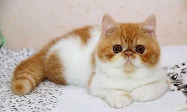 猫不喜欢什么味道
