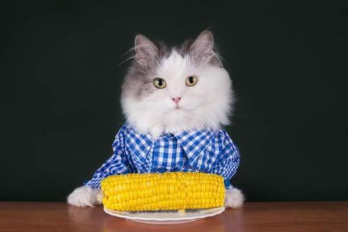 狸花猫拉肚子吃什么猫粮
