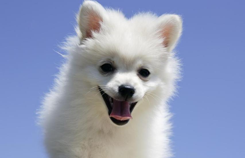 狗狗不能吃骨头?盘点不能给狗狗吃的食物!