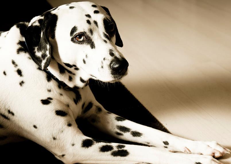 """被狗商""""毁掉""""的三种狗,你曾经绝对买不起"""