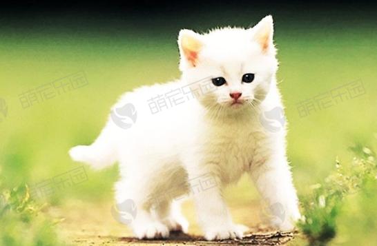 养猫会使人成瘾吗?