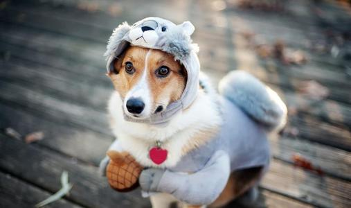 狗狗发烧感冒针一般要多少钱