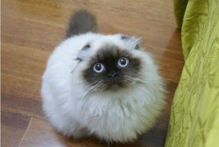 猫咪的记忆能够保持多久