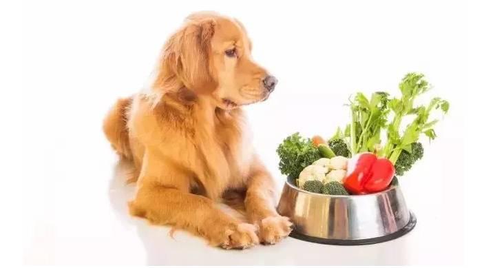 哪些食物会引起狗狗的呕吐和腹泻