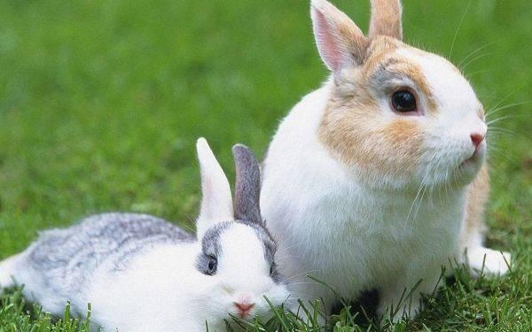 兔子感冒了怎么办