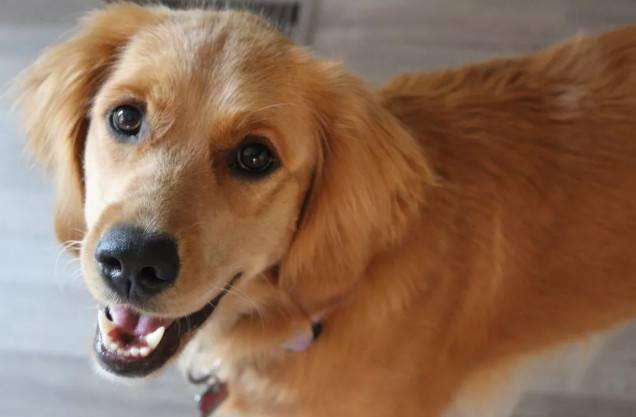 夏季狗狗的这些疾病,你也注意到了吗?