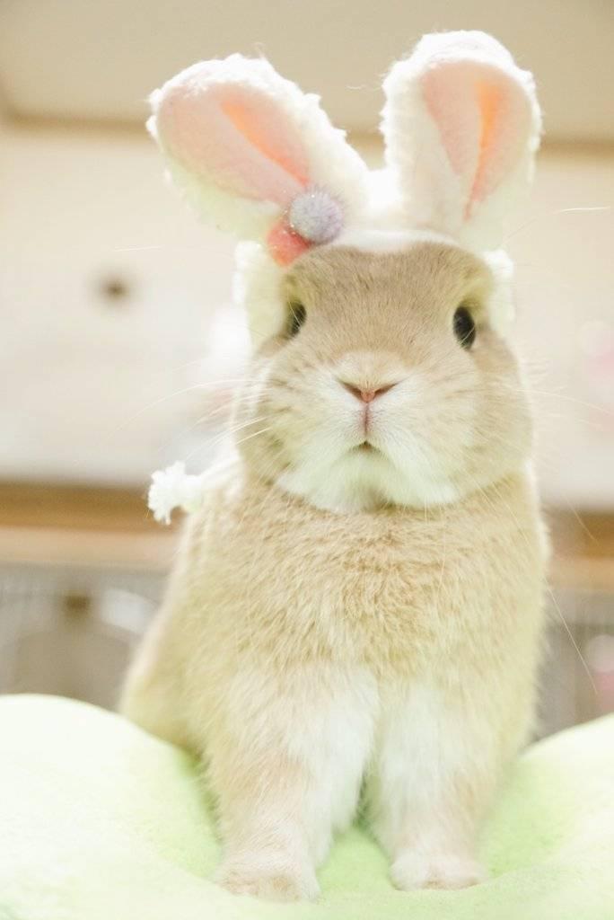 萌物,宠物,兔子,猫咪,壁纸头像可爱萌