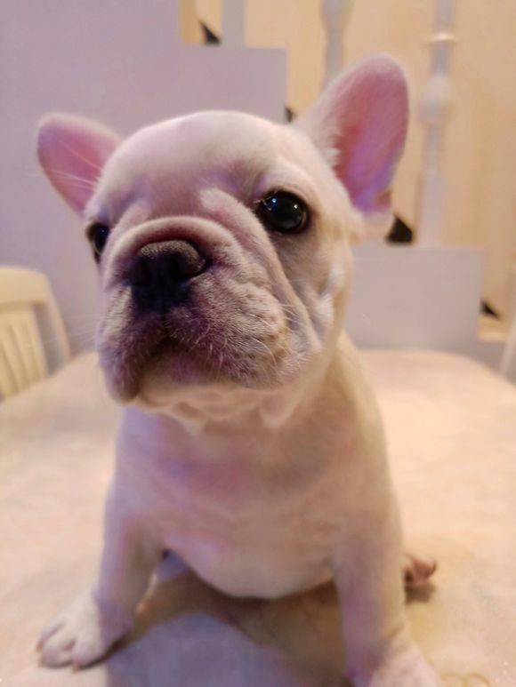 狗狗吃驱虫药后会有什么反应?