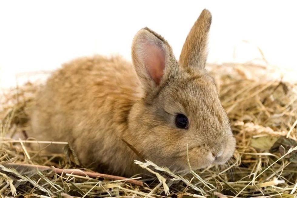 冬天的干草不绿了,兔子吃干草会不会没有营养?
