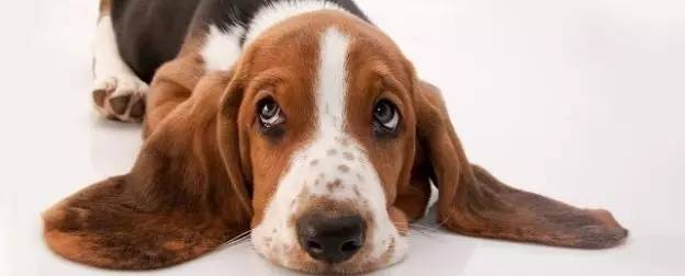 如何鉴别狗粮的好与坏?