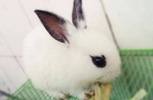 兔瘟有多可怕?
