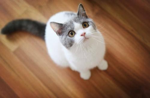 长期宅在家的猫主子也会长跳蚤?