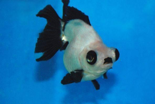养鱼口诀,学会鱼儿养的好!