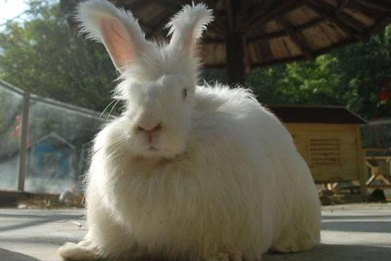 兔子会生气吗,兔子生气的表现