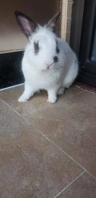 每天捏捏摸摸兔兔,不知不觉就大了
